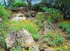 Entre rocas (Silvia Mottes/Silvia Estela Mottes) Tags: flores argentina cordoba rocas carlospaz