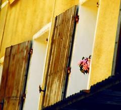 Flower Basket in a Window (Ekler) Tags: wood old pink house flower building art window century pencil photoshop photo basket processing shutter archetecture svetlana stowers olympuse410 soloha