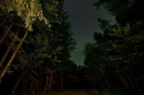 Stargazing In The Woods