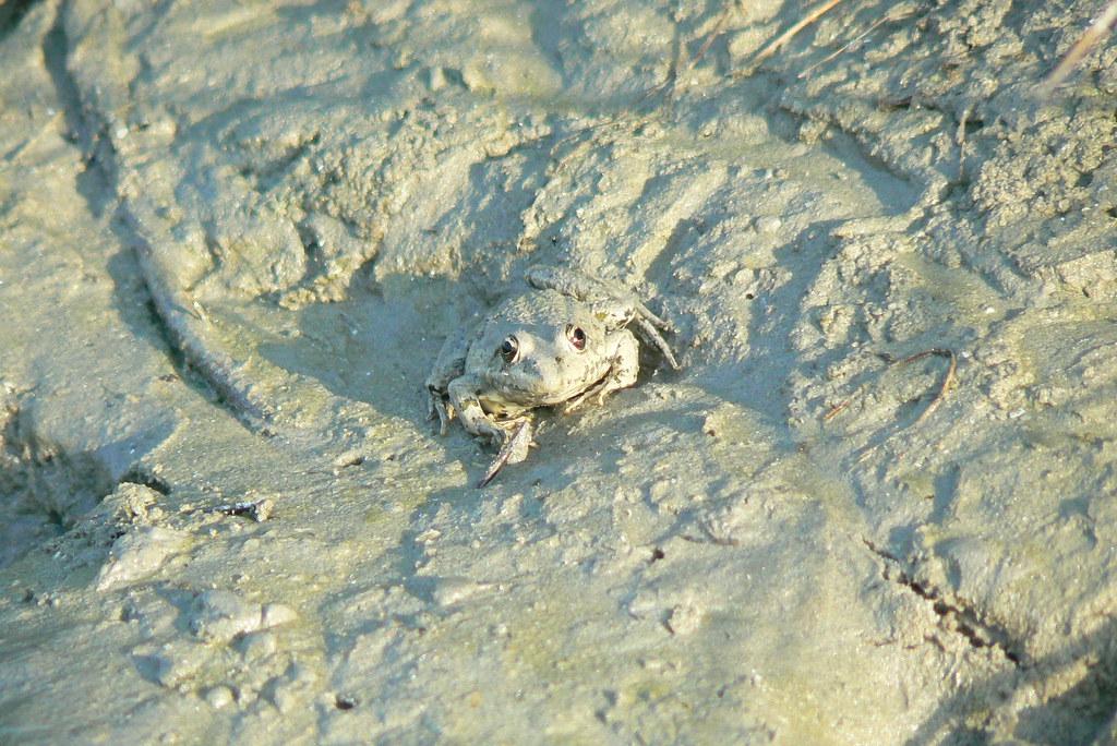 Camouflage: frog II