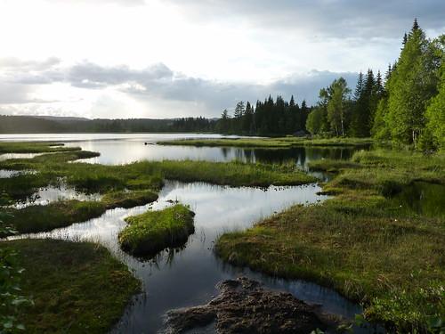 Gardlaushøgda naturreservat