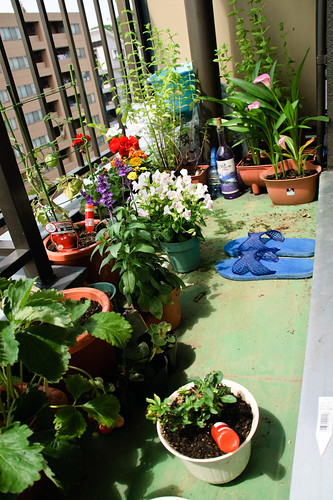 My garden June 15, 2010-4
