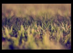 Picnic (Julio Barros) Tags: grass canon 50mm picnic bokeh f18 motleypixel
