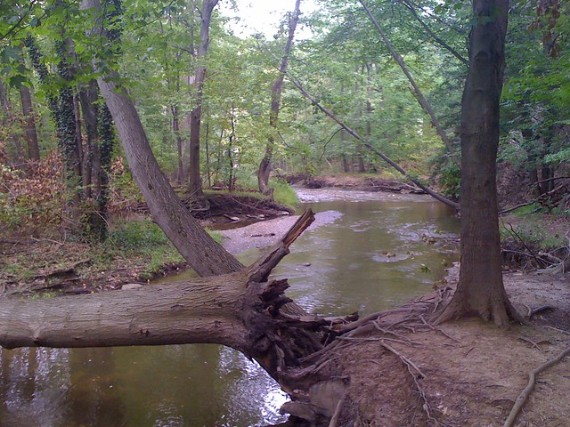 Picture of a stream with a downed log falling across it.