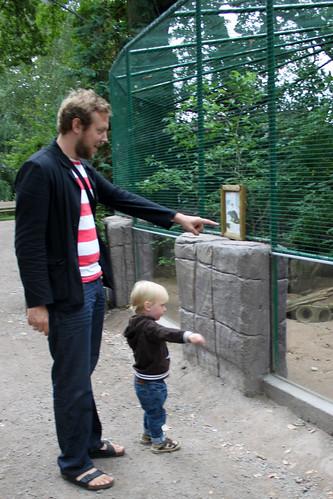 Gusten och pappa tittar på djur
