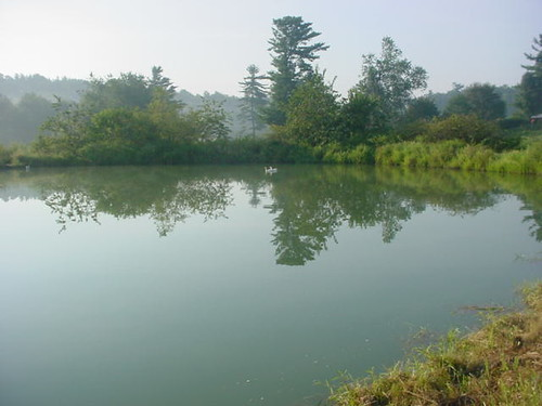 August morning at the pond