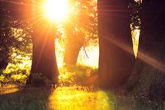 my secret place (andrew evans.) Tags: lighting morning trees light summer england sun nature misty fairytale forest sunrise landscape golden countryside kent woods nikon warmth ethereal flare sunrays wonderland storybook magical 70200 f28 enchanted d3