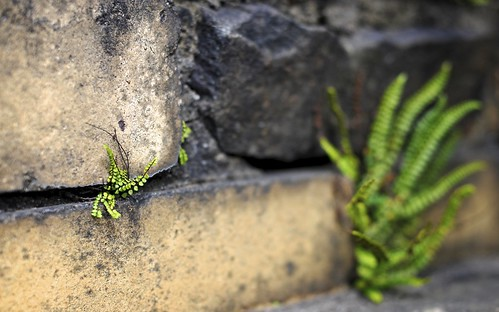 Plants Growing Out Of The Wall