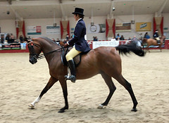 Towerlands 2010 UKIAHS - Ridden Gelding (pg tips2) Tags: show summer horses horse international arab ponies arabian aug 2010 equus arabs arabians  equines towerlands arabhorse arabhorses  ukiahs
