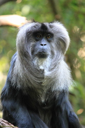 2232 macaque monkey