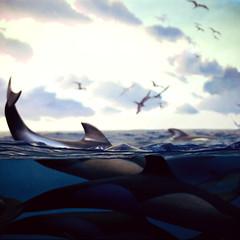 (Samantha West) Tags: americanmuseumofnaturalhistory letsgoswimming samanthawest partspiritanimal withiniamamermaid