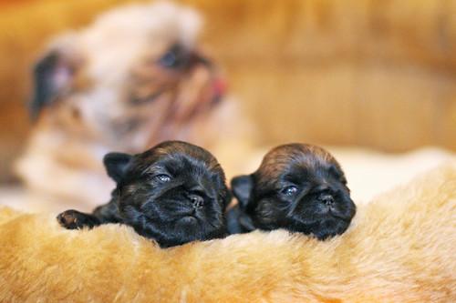 Park & Puppies 263