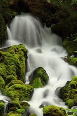 Close-up of Clearwater Falls, Umpqua River, Oregon (Alaskan Dude) Tags: travel nature oregon landscape waterfalls pacificnorthwest umpquariver canon30d clearwaterfalls 5photosaday umpquahighway ore138
