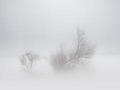 Barrie 3/3 (Linden Laserna) Tags: travel trees winter sky snow storm field weather hail farm meadow prairie blizzard