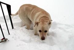 Zeus_snow_11211e