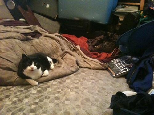 Both Kitties (from Enk)