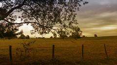 Comme un après-midi d'été... (Fred&rique) Tags: lumixfz1000 photoshop raw paysage hdr nature champs arbre ciel lumière couleurs