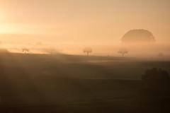 Morgenspaziergang (Traumfotos Trautmann) Tags: bausenhagen dämmerung fröndenberg nebel nebelstimmung panasonicdmcg6 sonnenaufgang kreisunna sauerland ruhrgebiet ruhrpott morgenlicht panasonic mft microfourthirds