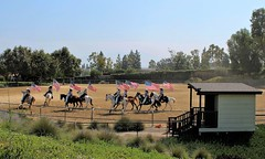 Pathway to Glory (Esther Spektor - Thanks for 12+millions views..) Tags: show horses arena booth plant tree grass flag rider california fence summer estherspektor canon