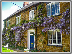 Nature. Flowers. Magnificent Wisteria. (Bill E2011) Tags: nature england northamptonshire flowers wisteria canon beauty climbers climbing
