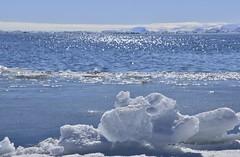 DSC_0336 (JillScoby) Tags: canada nunavut pondinlet byoletisland icefloe floeedge arctic ocean ice snow