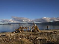 Petone (Wozza_NZ) Tags: petone beach fort lowerhutt nznewzealand driftwood wellington