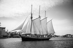 Svanhild af Borgå (jptoivon) Tags: view cruise 2017 nikon d800 sailing sunny ship summer old halkolaituri helsinki katajanokka sea uusimaa finland