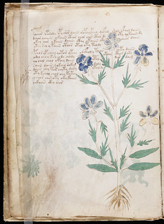 Voynich Manuscript Page019.jpg