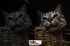 Couleur slective / Lightning Effect (mariejophotodesign) Tags: chat couleur retouchephoto kostitsyn slective