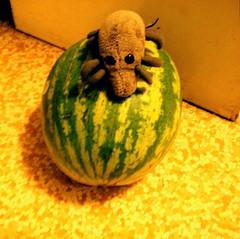Watermelon Mite