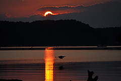 It's Never Just Sunset (BKHagar *Kim*) Tags: blue light sunset sun sunlight bird heron water silhouette night clouds river evening al cloudy dusk great athens elk gloaming greatphotographers cloudynight alalabama capturethefinest bkhagar regionwide