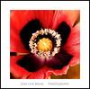 Magnificence (Jose Luis Mieza Photography) Tags: flowers flores flower fleur fleurs flor benquerencia florews reinante jlmieza reinanteelpintordefuego joseluismieza