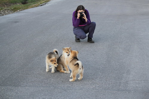 Rachel photographing husky puppies