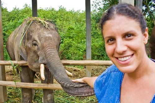 Elephants-11