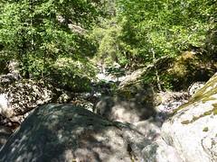 Remontée du Fangu : en quittant la trace de Tana di l'Orsu, le démarrage végétal en RD