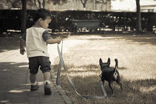 dogwalker-14