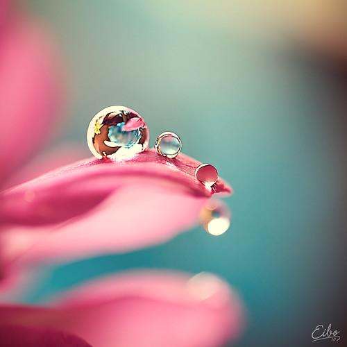 Jewels (Explored) (by Eibo-Jeddah)