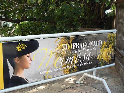 année du mimosa.jpg