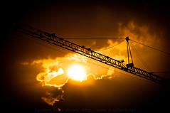 Crane / Grue