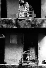 (leo.eloy) Tags: bw film movie casa kodak tmax pb scan bronica filme 2009 120mm abandonada shortmovie etrs descalça devaneio curtametragem zenza pelicúla leoeloy tainámuller
