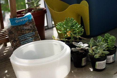 Succulent Planter Supplies