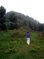 Thou art gone from my gaze like a beautiful dream, And I seek thee in vain by the meadow and stream ~George Linley~ (KashiftheGipsy) Tags: galliyat gali forest flowers kashifthegipsy landscape landscapes miranjani mountain mountains nature nathiagali nathia naturepeople nwfp pakistan peopleenjoyingnature pine trekking trek tree travel tourism valley valleys worldtrekker