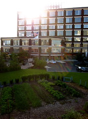Kendall college garden