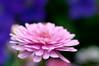 (Per Erik Sviland) Tags: flower macro nikon bokeh erik per d300 pererik sviland sqbbe pereriksviland