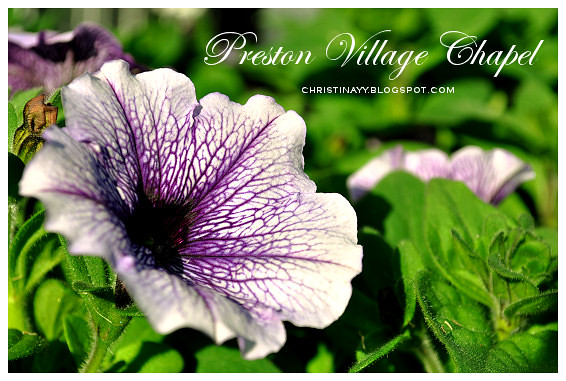 Preston Village Chapel & Manor: Purple Flowers