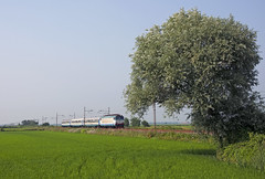 R10321 (maurizio messa) Tags: railroad railway trains piemonte bahn tigre mau ferrovia treni e632 nikond90 r10321