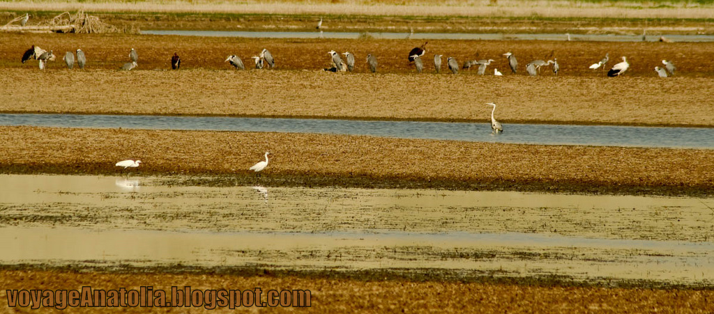 Birds' Haven by voyageAnatolia.blogspot.com