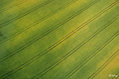 Paragonale (ChrisP-Photography) Tags: green field vert champ diagonale abstrait graphique
