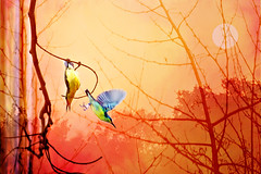 Two to Tango (kalsnchats) Tags: sunset sun birds composite background branches flight images hanging kalpana twings chatterjee femalepurplesunbird txtured kalsnchats