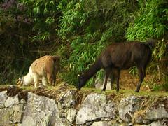 Machu Picchu (Deve82) Tags: vacation peru per casio machupicchu exilim vacanza gapadventures exv7 casioexilimexv7 essenceofperu